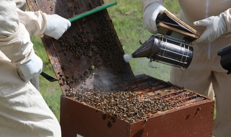 apiculteur equipement enfumoir