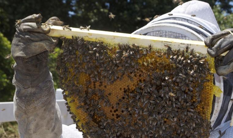 apiculteur equipement gant