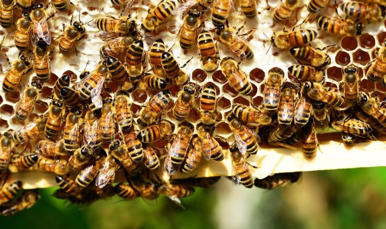 le miel composition