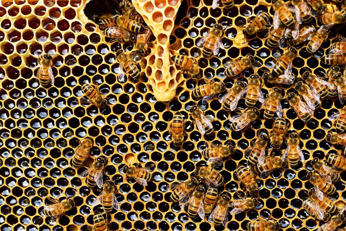 ruche abeille architecte