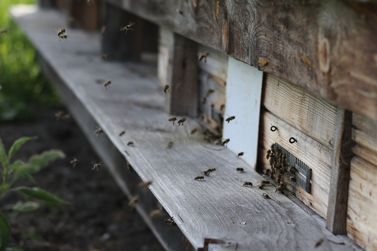 ruche abeille manutentionnaire
