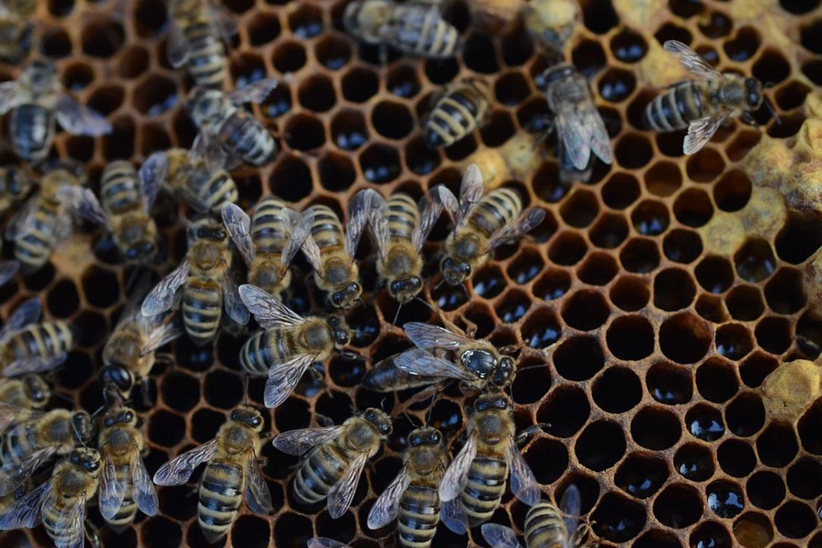 ruche abeille nettoyeuse