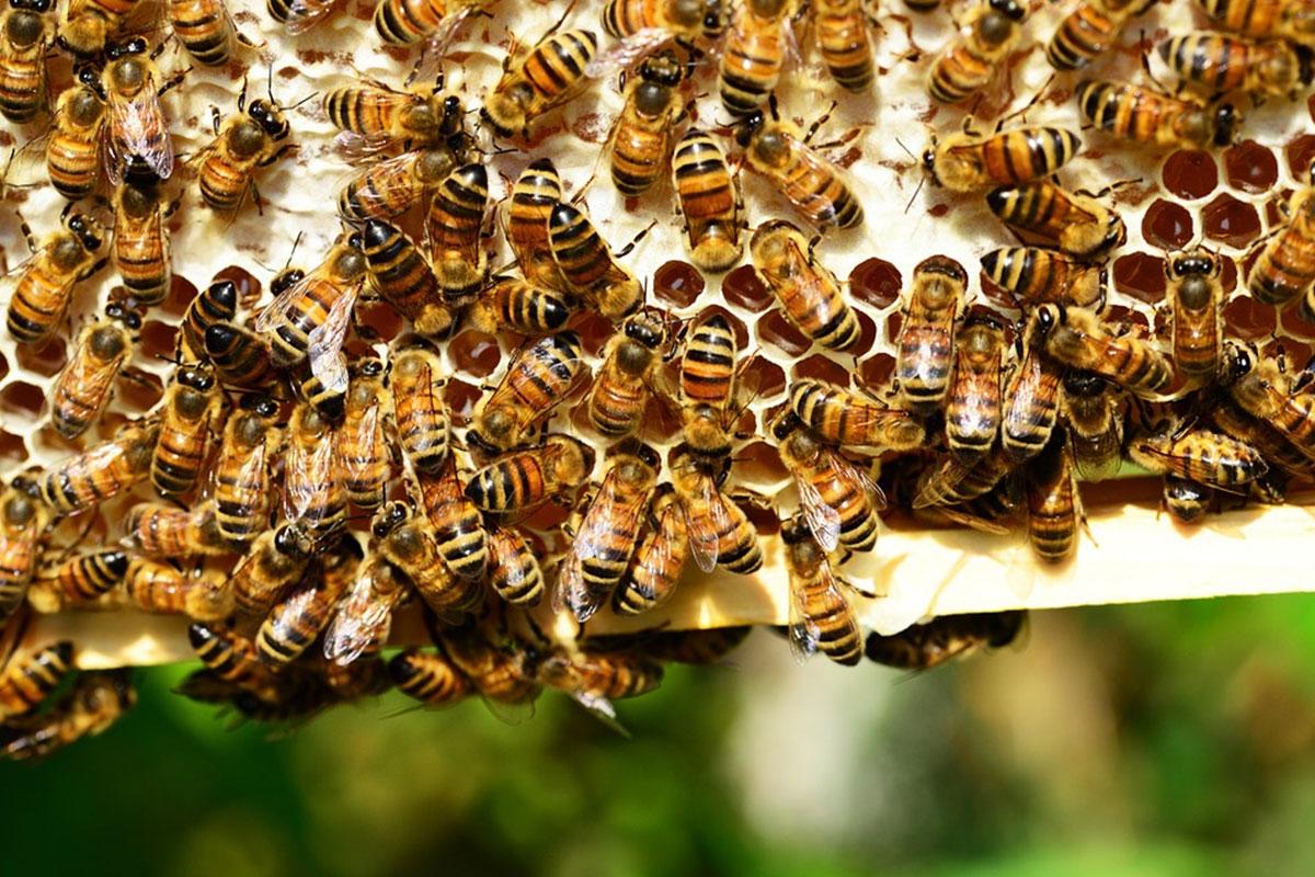 ruche abeille ouvriere