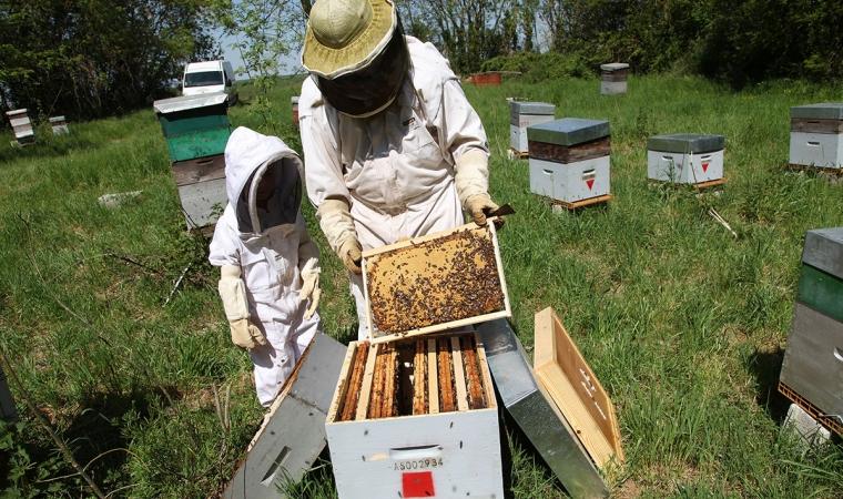 ruche abeille saison apicole