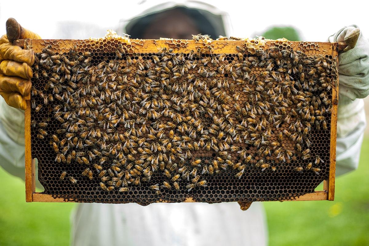 valeurs miel cretet qualite alimentaire